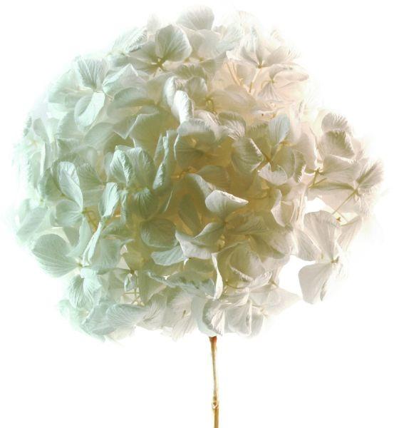 floral-composition